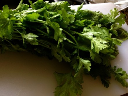 A Bunch of Cilantro