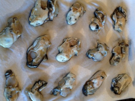 Oysters on a paper towel
