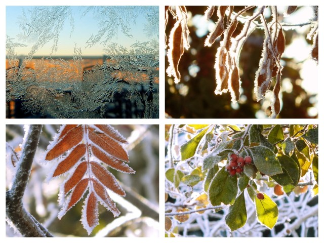Hoarfrost Collage