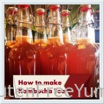 Making Kombucha Tea