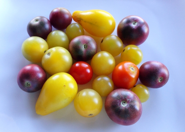 Rainbow Heirloom Tomatoes