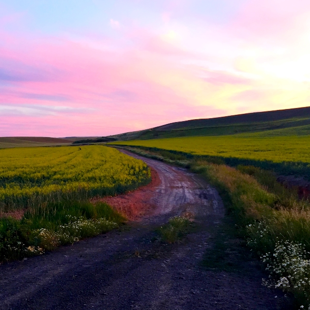 Sunset on the Canola Fields