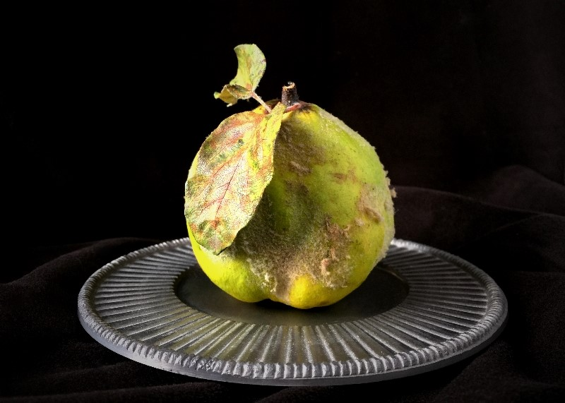 Quince on a Silver Plate