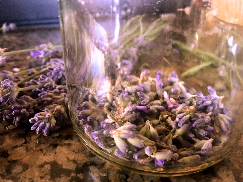 Lavender Buds in Jar