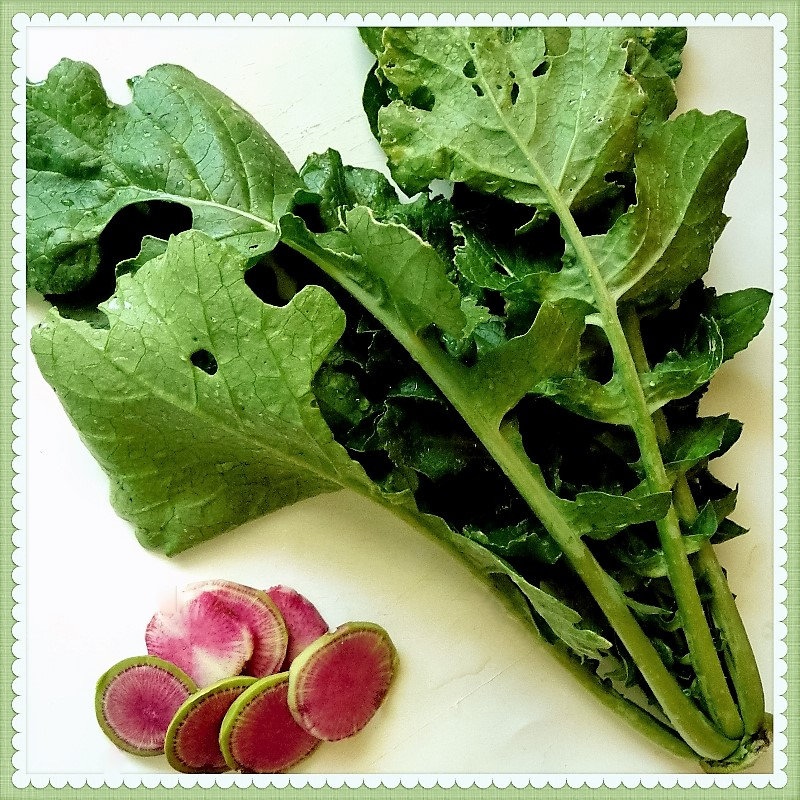 Watermelon Radish & Leaves