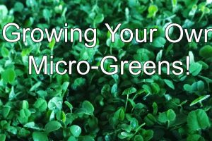 growing-your-own-micro-greens